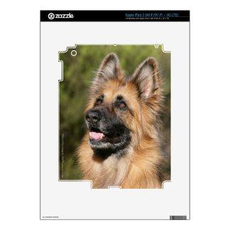 Long Haired German Shepherd 1 iPad 3 Decals