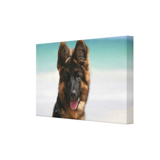 Long Haired German Shepherd Beach Canvas Print