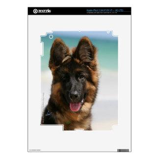 Long Haired German Shepherd Beach iPad 3 Decals