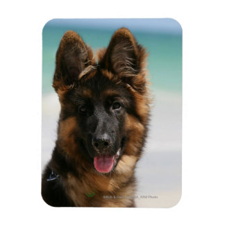 Long Haired German Shepherd Beach Magnet