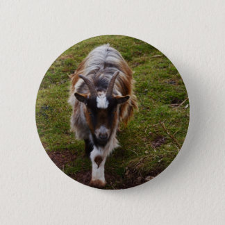 Long Haired Goat. Pinback Button
