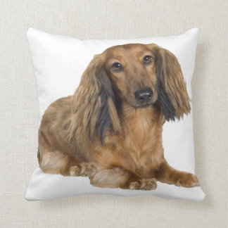 Long Haired Gold Dachshund Pillow