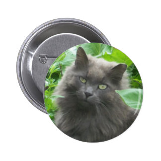 Long Haired Gray Russian Blue Cat Pinback Button