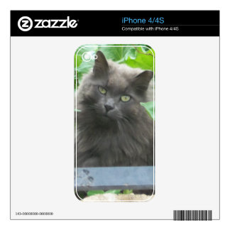 Long Haired Gray Russian Blue Cat Skin For The iPhone 4