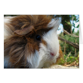 Long-Haired Guinea Pig Card