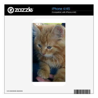 Long Haired Kitten iPhone 4 Skins