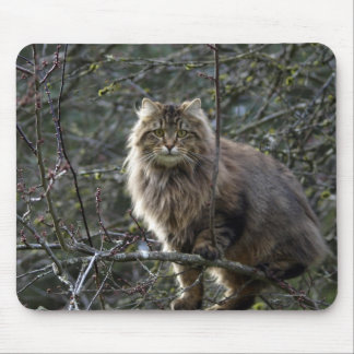 Long-haired Maine Coon Tabby Cat Mousepad