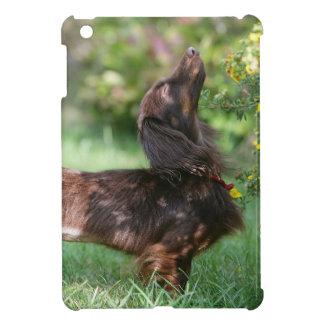 Long-haired Miniature Dachshund 1 iPad Mini Case