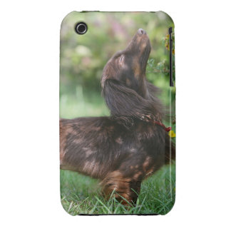 Long-haired Miniature Dachshund 1 iPhone 3 Cases