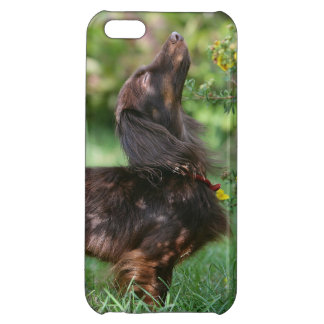 Long-haired Miniature Dachshund 1 iPhone 5C Covers