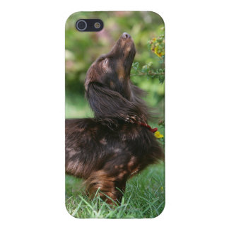 Long-haired Miniature Dachshund 1 iPhone SE/5/5s Case