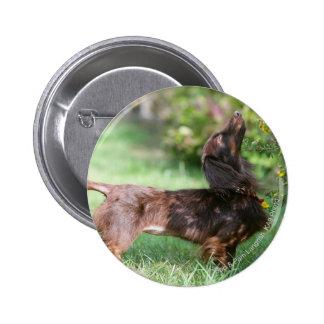 Long-haired Miniature Dachshund 1 Pinback Button