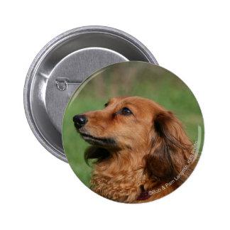 Long-haired Miniature Dachshund 2 Button