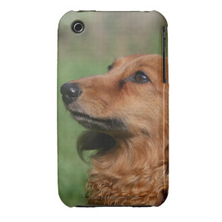 Long-haired Miniature Dachshund 2 iPhone 3 Case-Mate Cases