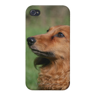 Long-haired Miniature Dachshund 2 iPhone 4/4S Cover
