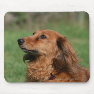 Long-haired Miniature Dachshund 2 Mouse Pad