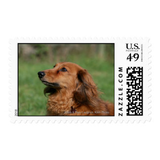Long-haired Miniature Dachshund 2 Postage