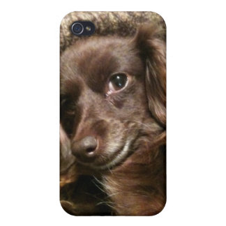 Long Haired Miniature Datsun iPhone 4/4S Case