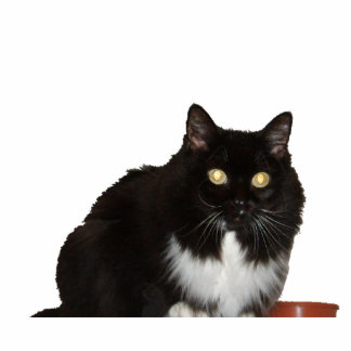 Long Haired Pet Cat Cutout