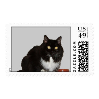 Long Haired Pet Cat Stamps
