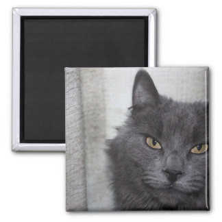 Long haired Russian Blue Cat Magnet