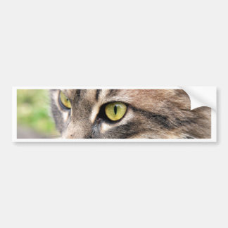 Long Haired Tabby Bumper Sticker