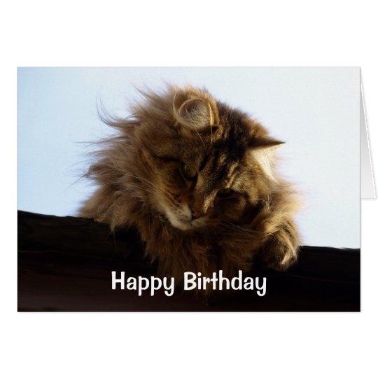 Birthday Orange Cat: Long-Haired Tabby Cat Birthday Card