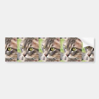 Long Haired Tabby Cat Bumper Sticker