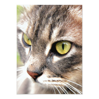 Long Haired Tabby Cat Card