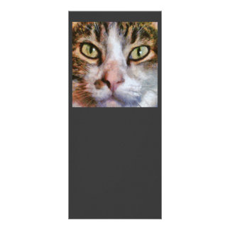 Long Haired Tabby Cat Close Up Portrait Rack Card