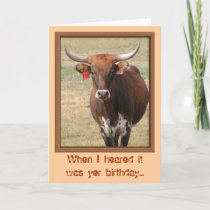 Long-horn Steer Birthday Card