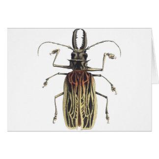 Long-Horned Beetle, Prionus Cervicornis Card