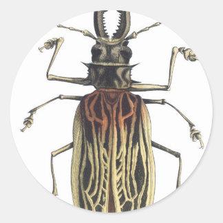 Long-Horned Beetle, Prionus Cervicornis Classic Round Sticker