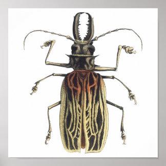 Long-Horned Beetle, Prionus Cervicornis Poster