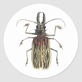 Long-Horned Beetle, Prionus Cervicornis Stickers