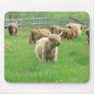 Long Horned Cattle On Field Eating Grass Mouse Pads