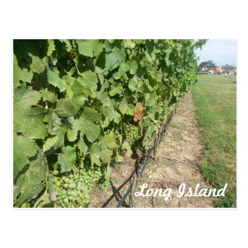 Long Island Grapevines Post Card