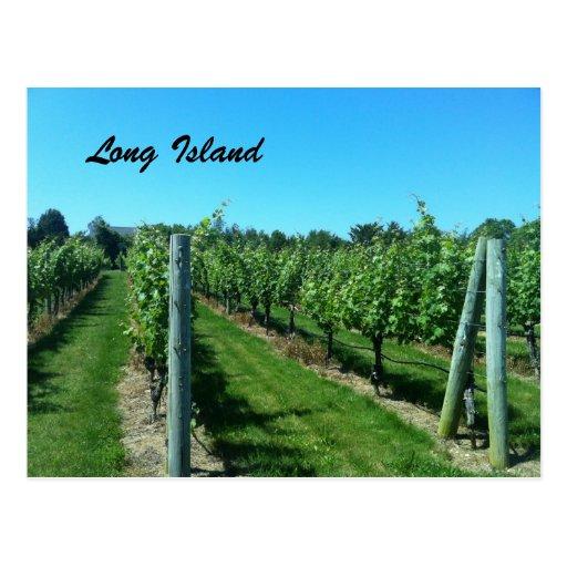 Long Island Vineyard Post Card