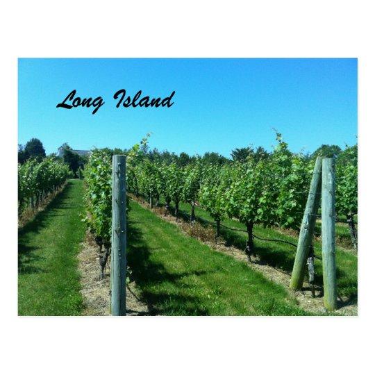 Long Island Vineyard Postcard