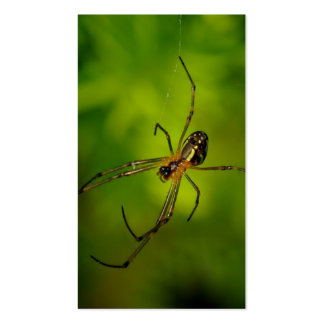 Long-jawed Orb Weaver Spider Business Card