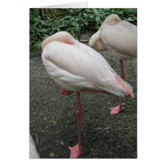 Long Legged Flamingo Card