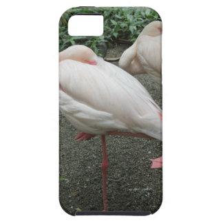 Long Legged Flamingo iPhone SE/5/5s Case