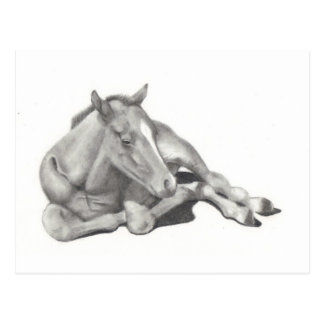 LONG-LEGGED FOAL: HORSE: PENCIL: REALISM POSTCARD
