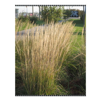 Long Matured Grass giveaway return gifts for KIDS Letterhead