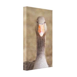 Long neck bird canvas print