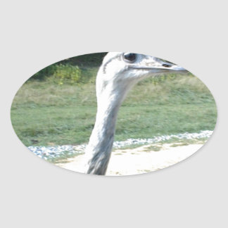 Long Neck Ostrich Profile Sticker