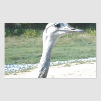 Long Neck Ostrich Profile Stickers