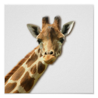 Long Necked Giraffe  Poster