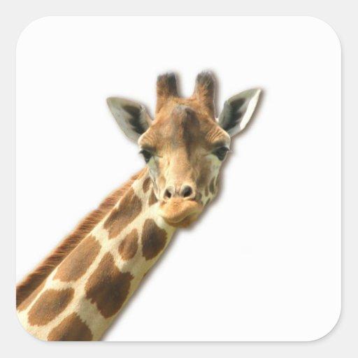 Long Necked Giraffe Sticker