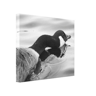 Long Necked Goose Canvas Print